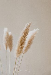M Studio fluffy beige dried plants close-up
